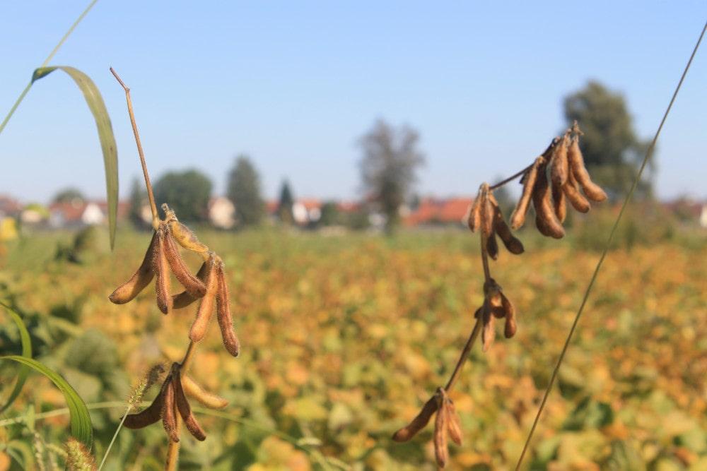 Ackerbau Landwirtschaft